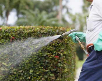Benefits of Organic Pest Control