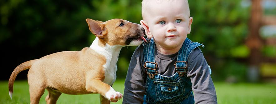 dog licking a baby