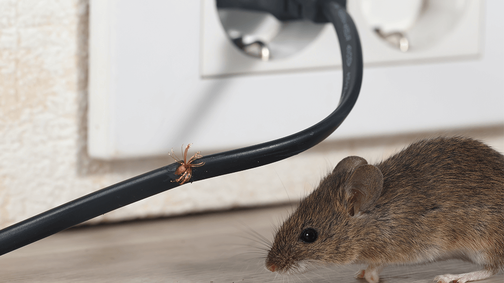 mouse with bug on a wire